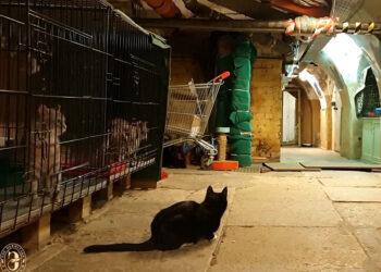 У эрмитажных котов обнаружился французский благодетель, завещавший им 3 тысячи евро