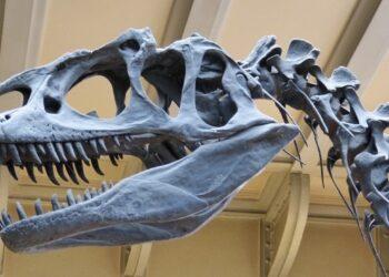 Палеонтологи нашли в Аргентине останки самого крупного динозавра