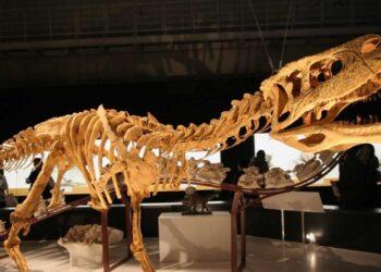 Археологи нашли кости крупнейшего живого существа в истории