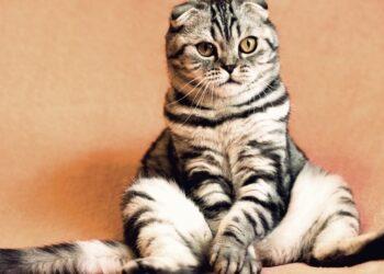 Биологи объяснили любовь котов к мяте