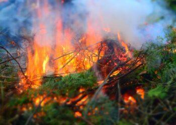 Российские ученые обнаружили новый способ выявления пожаров на ранней стадии