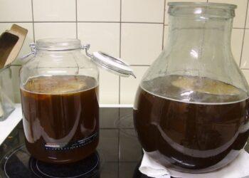 Исследование доказало наличие новых биоматериалов в ядре чайного гриба