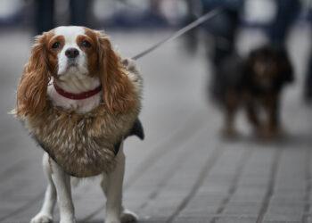 Девушка достала тонущую собаку из ледяной воды в Сочи (ВИДЕО)